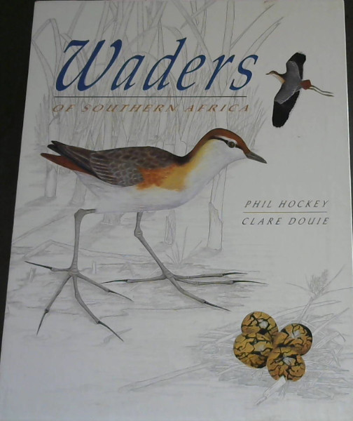 Image for Waders of Southern Africa