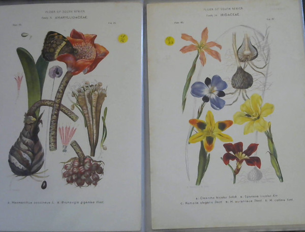 Image for Flora of South Africa - 41 Colour Plates