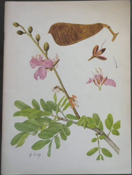 Image for Botanical Studies from the Botanical Research Institute / Plantkundige Studies van Die Navorsingsinstituut vir Plantkunde