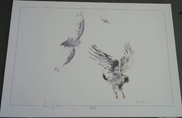"Image for Wild Life Prints : Pam Guhrs - ""Duel in The Sun"", ""Aerial Combat"" - Limited"