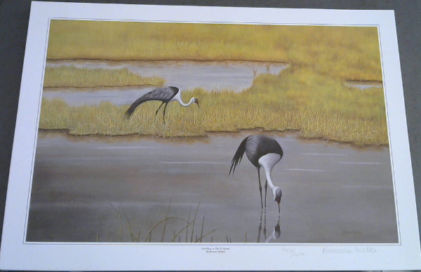"Image for Wild Life Prints: Bronwen Mellor : ""Shimmering in the Sun"", ""Strutting in the Wetlands"" - Limited"