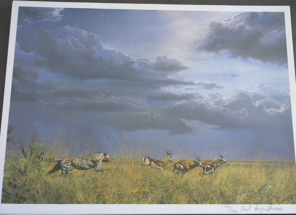 Image for Wild Life Prints : Paull Augustinus - Limited